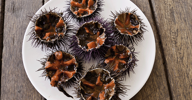 Sea urchins from Spain
