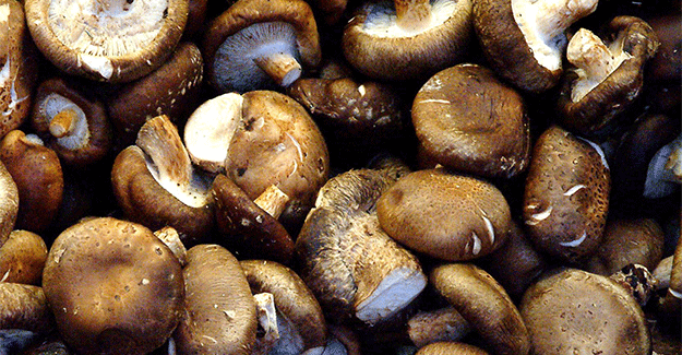 Spanish wild mushrooms