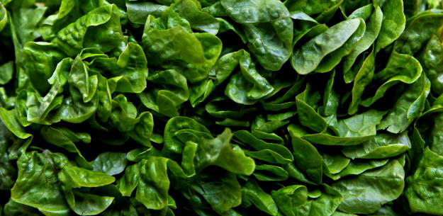To The Heart of Spanish Lettuce