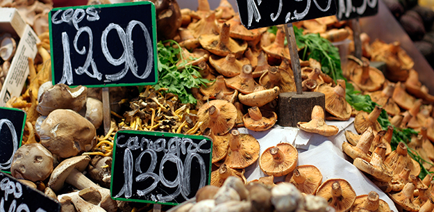 Wild mushrooms from Spain