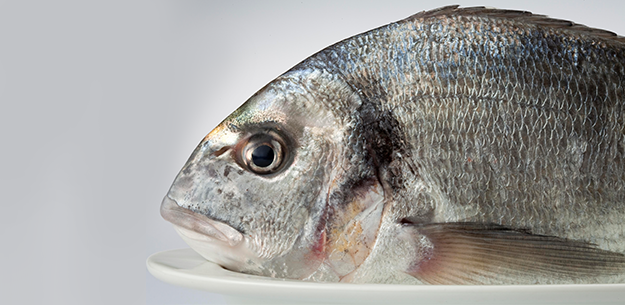 Spanish farmed fish