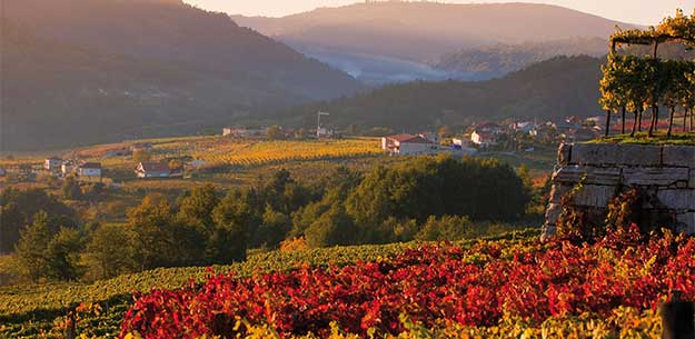 Red wines from Galicia: DO Ribeiro