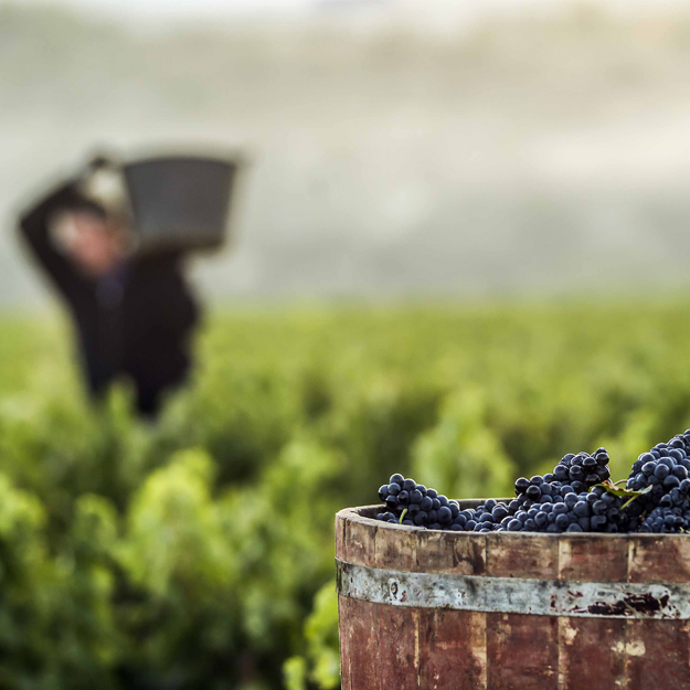 Rioja Wines Take Center Stage in Shanghai