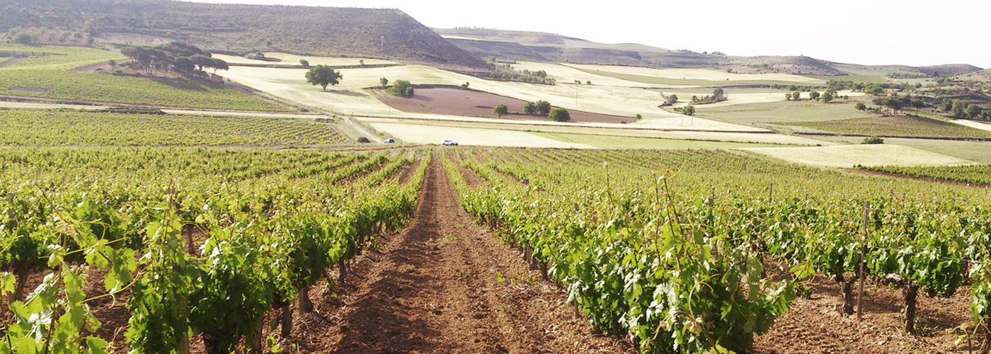 Bodegas Torres Commits to Promoting Sustainability in the Wine Industry / Photo by: Bodegas Torres