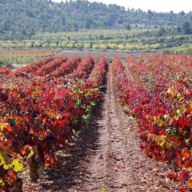 Organic wines in Spain. Photo by Bodegas Altolandon.