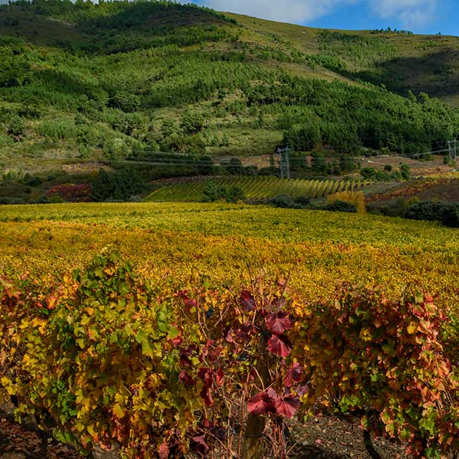 Valdeorras vineyards. Photo by: DO Valdeorras